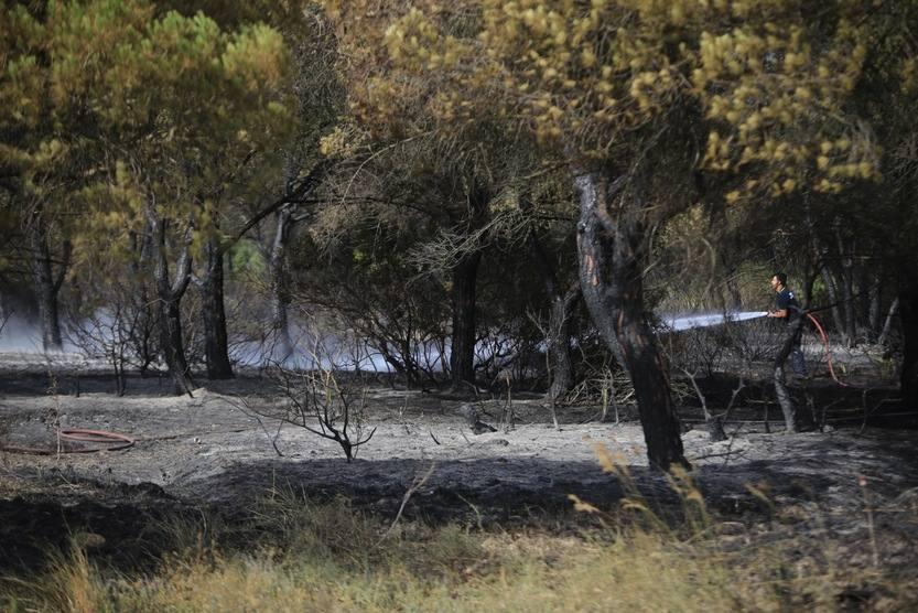 Los Bomberos sofocan un incendio forestal en el Pinar del Hierro