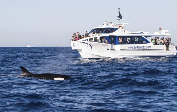 Avistamiento de cetáceos para 2