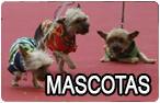 Mascotas Cádiz